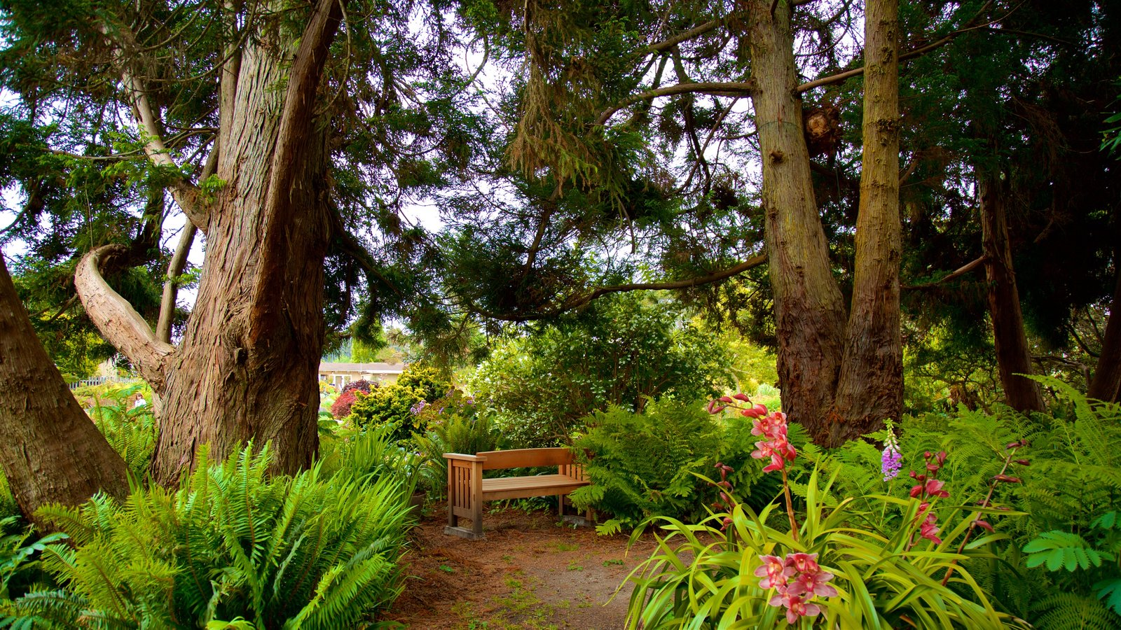 Mendocino Coast Botanical Gardens Which Includes Wildflowers And A Garden