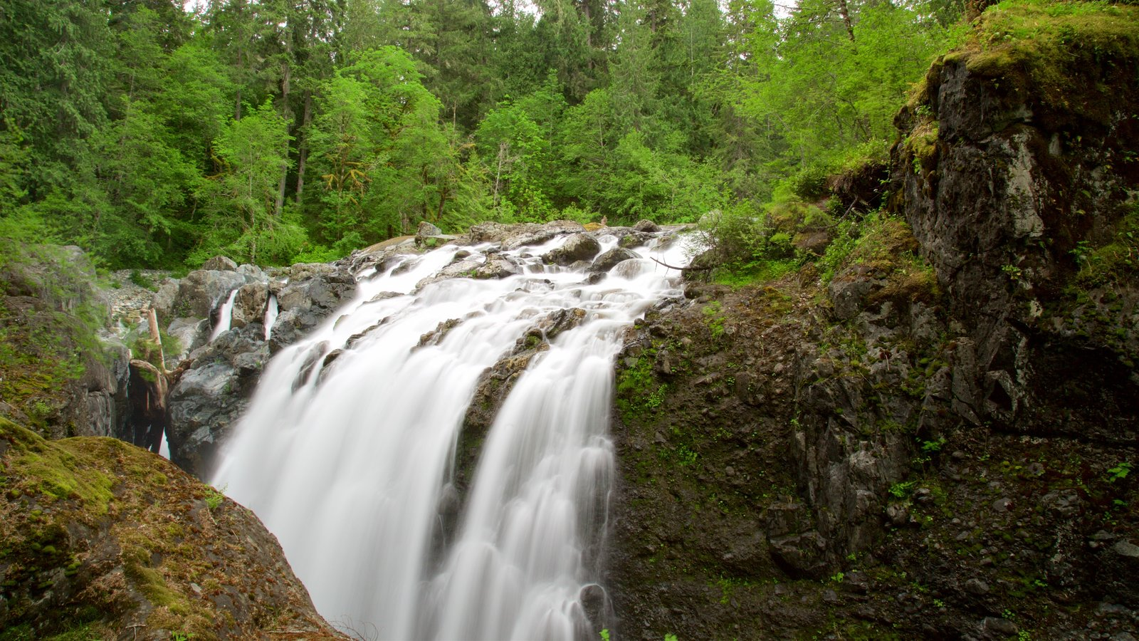 Englishman River Falls Provincial Park showing a cascade and forest scenes
