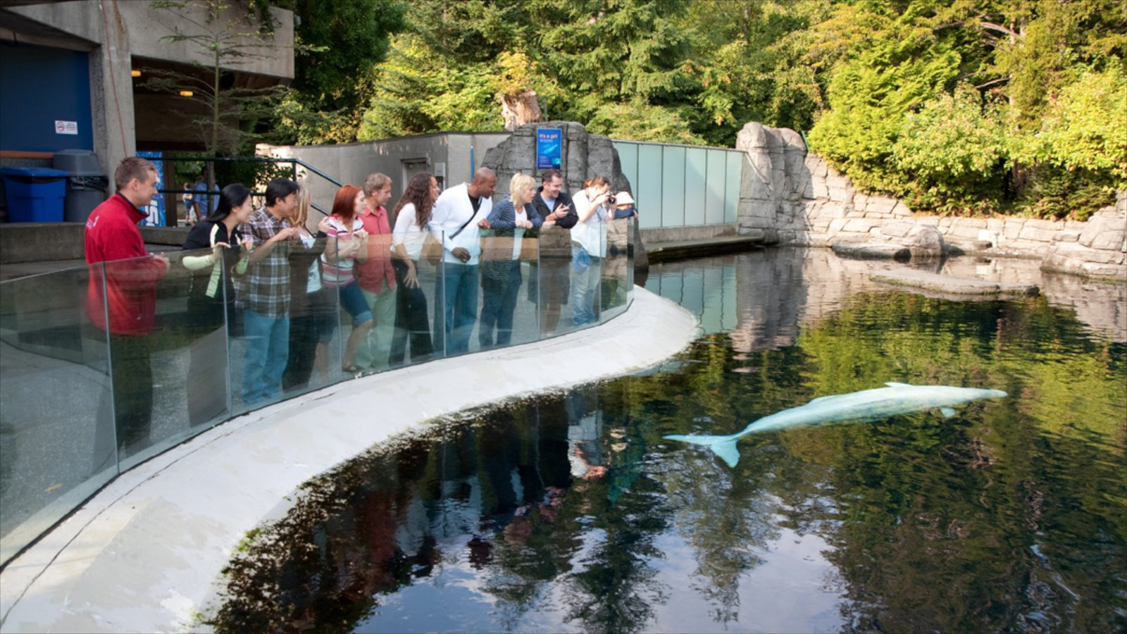Fish aquarium vancouver - Vancouver Aquarium Which Includes A Pool Marine Life And A Waterpark