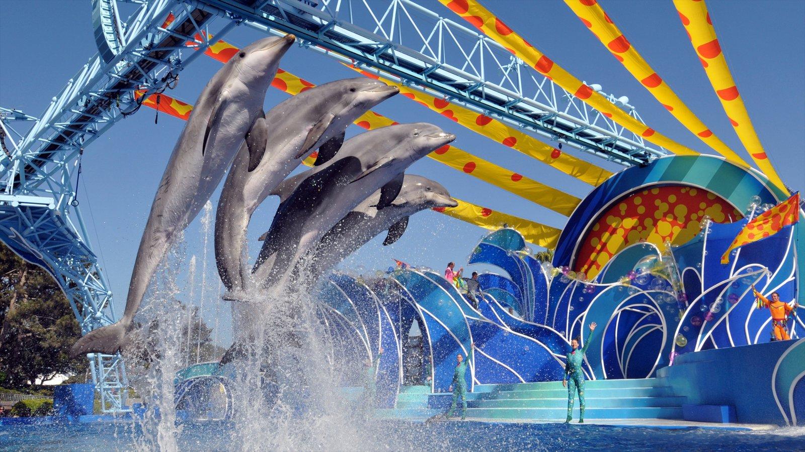 Seaworld mostrando vida marinha e passeios