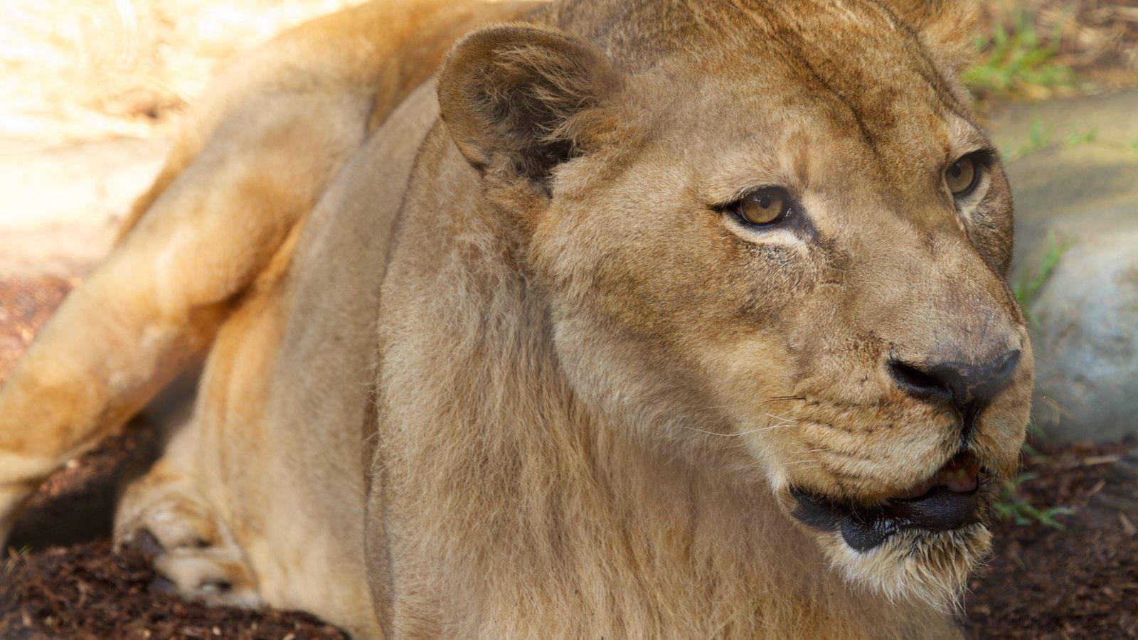 San Diego Zoo caracterizando animais perigosos e animais de zoológico