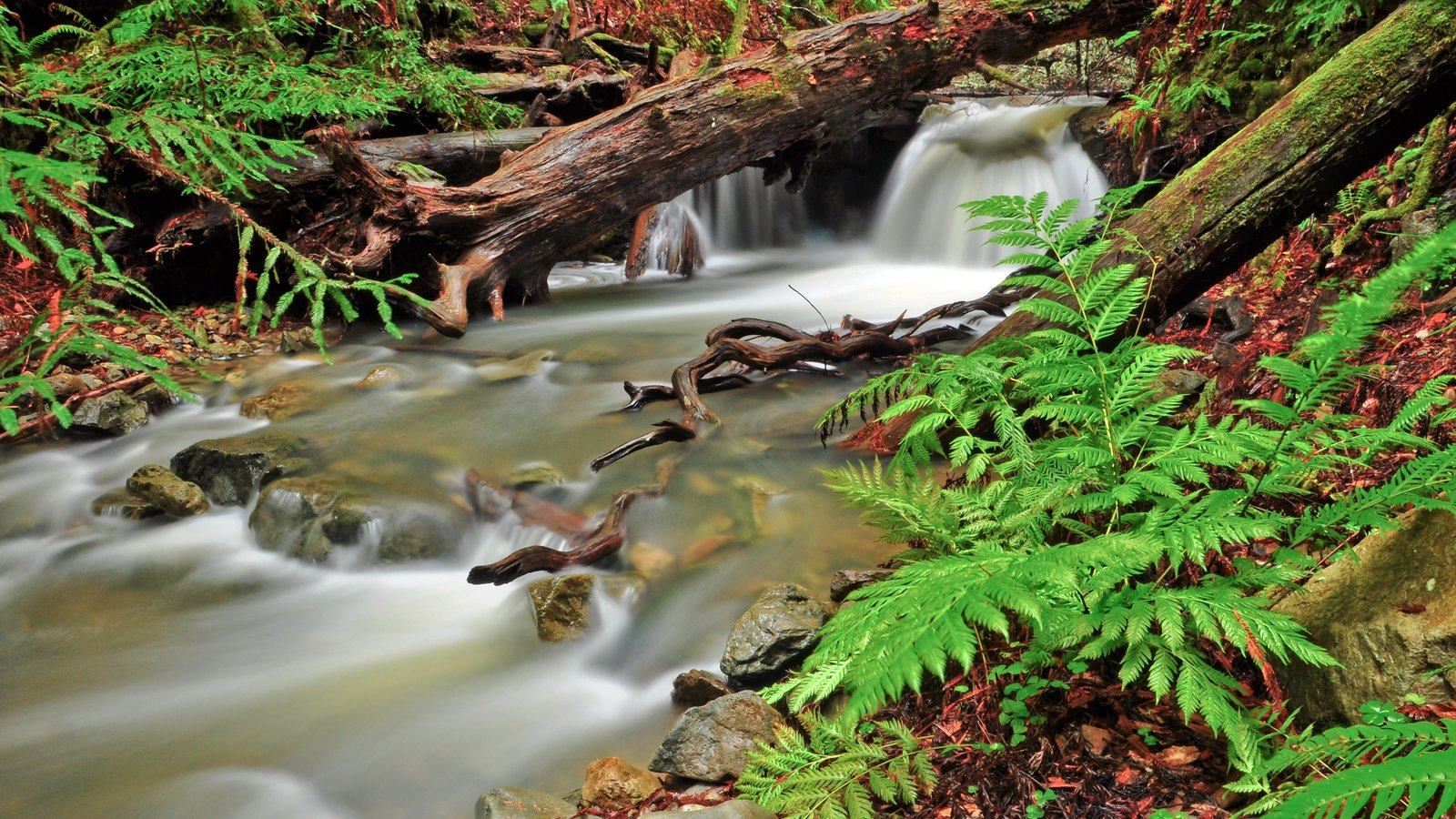 Muir Woods showing a river or creek, forests and landscape views