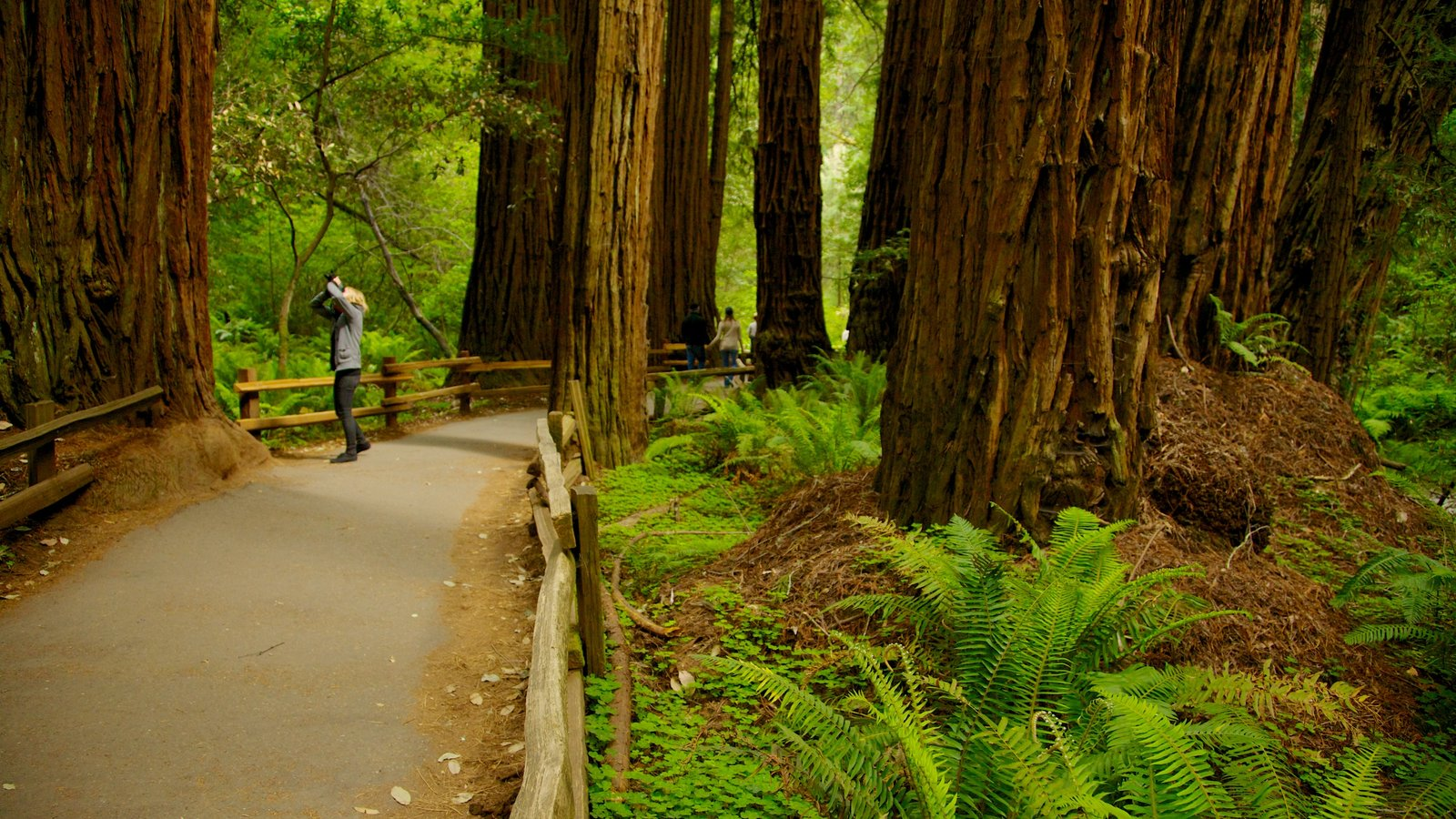 Muir Woods showing a park, landscape views and hiking or walking