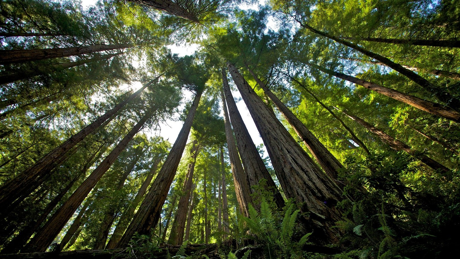 Muir Woods showing landscape views and forest scenes