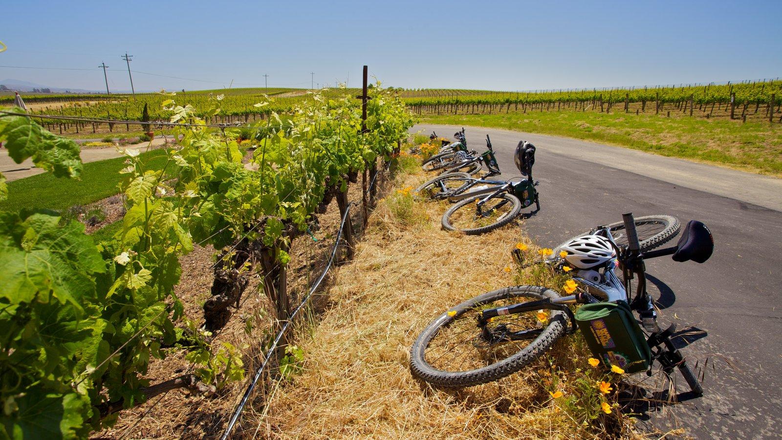 Napa Valley mostrando ciclismo de montaña, tierras de cultivo y vistas de paisajes