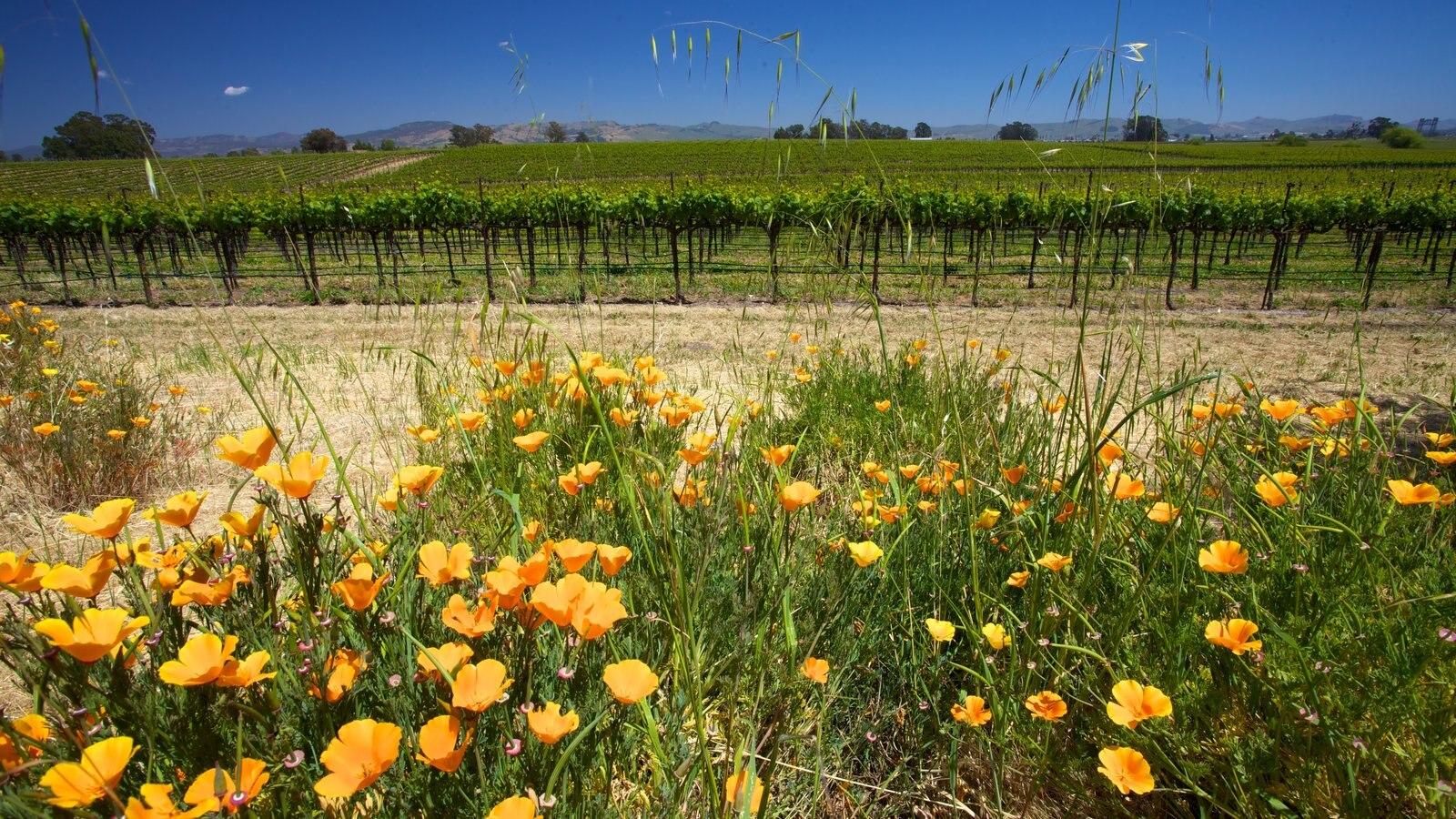 Napa Valley que incluye flores silvestres