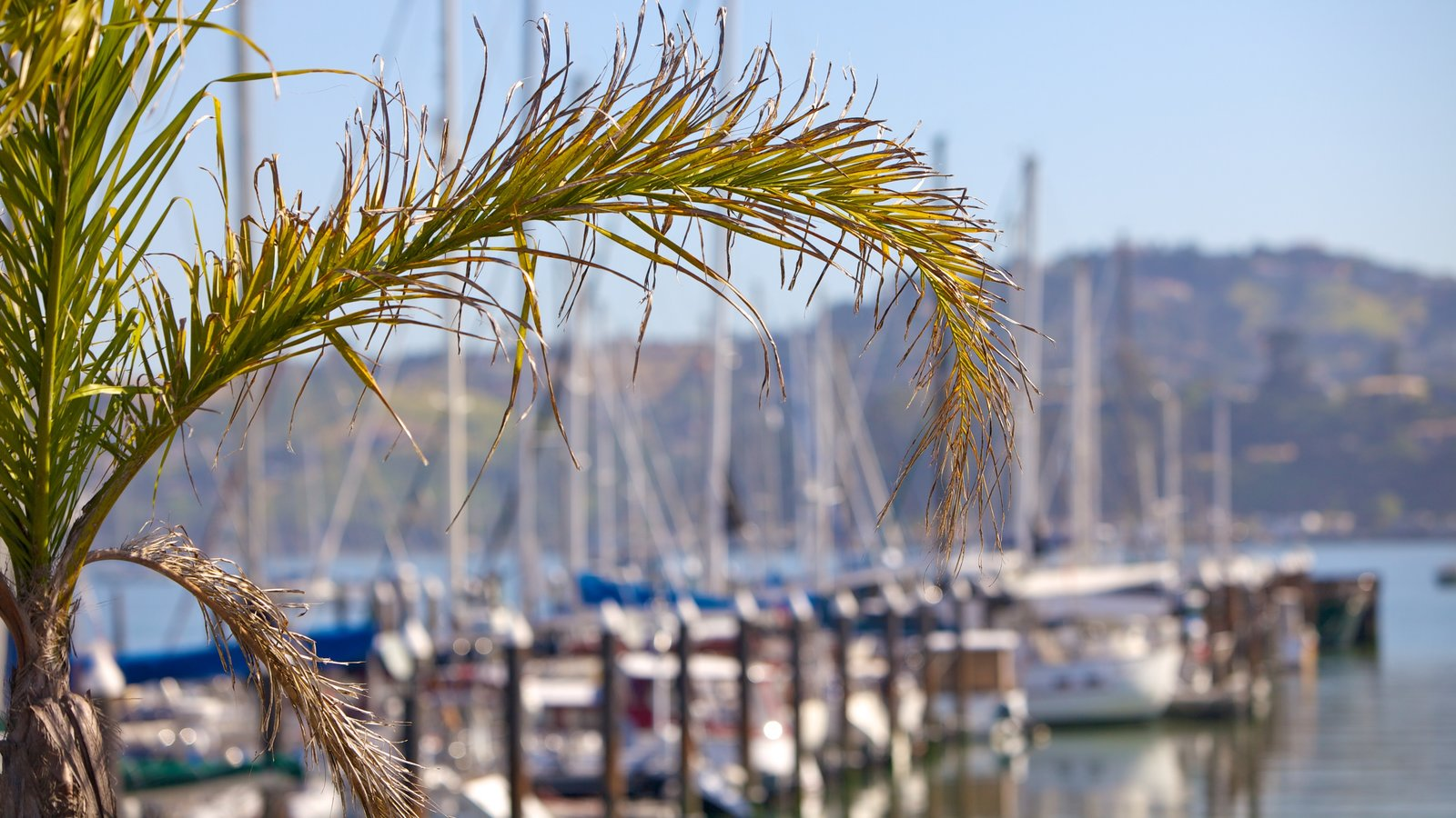 Sausalito showing a marina
