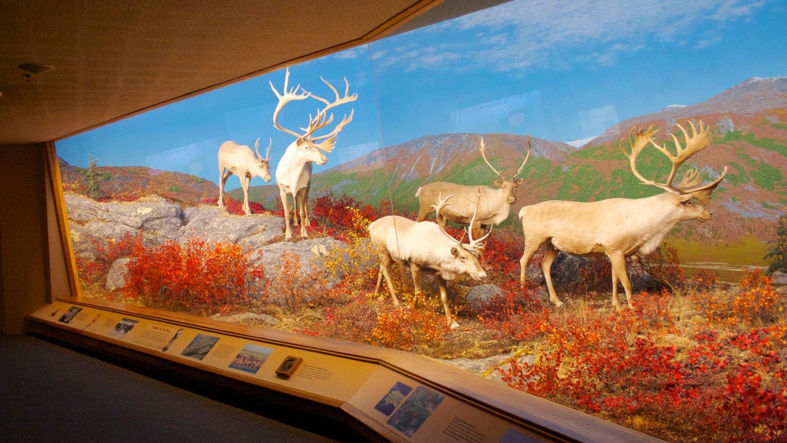 Denver Museum of Nature and Science mostrando vistas internas