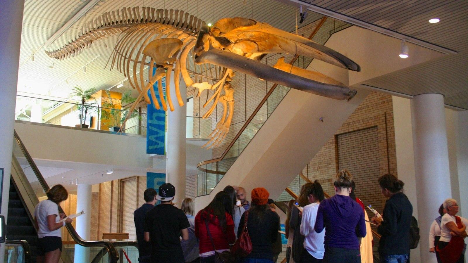Denver Museum of Nature and Science mostrando vistas internas assim como um grande grupo de pessoas