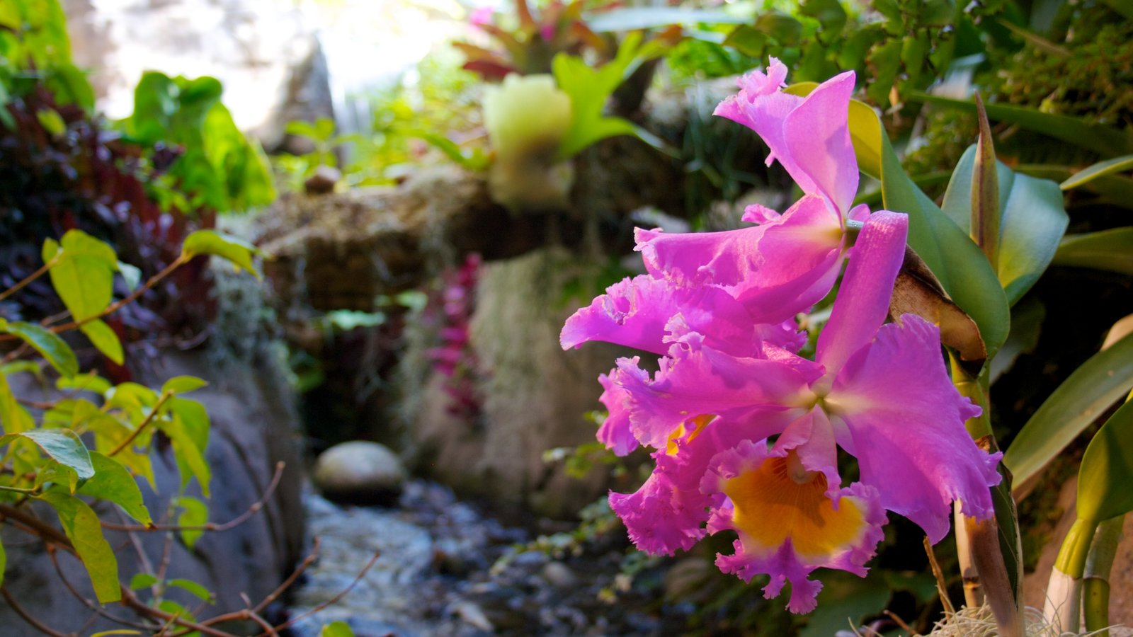 Jardim Botânico de Denver caracterizando um jardim, flores silvestres e flores