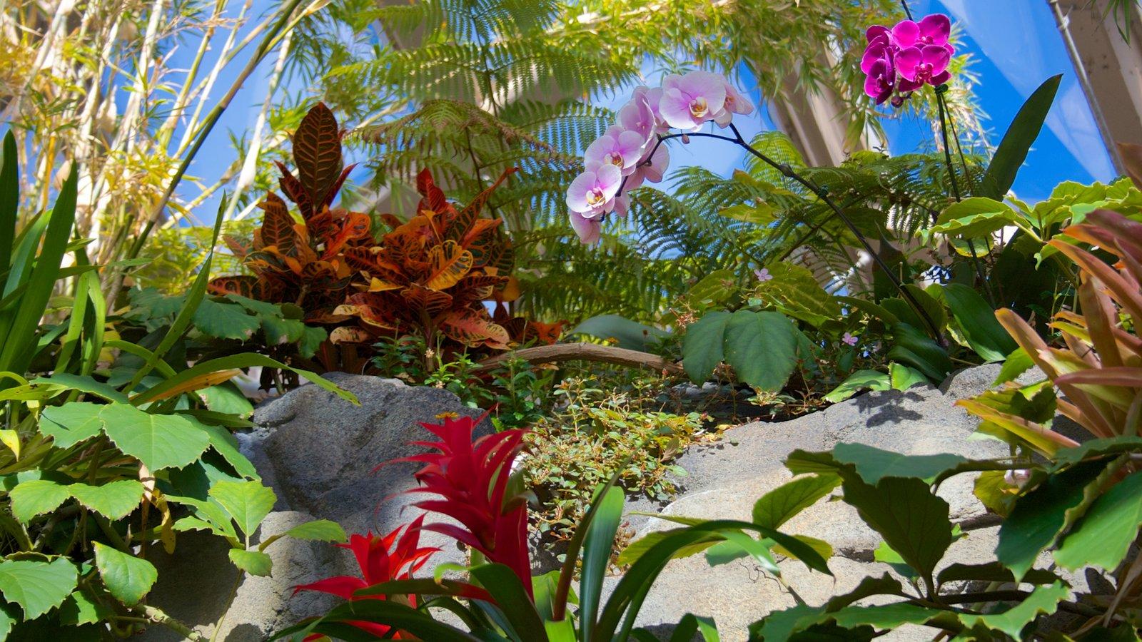 Jardim Botânico de Denver caracterizando flores silvestres, flores e um parque