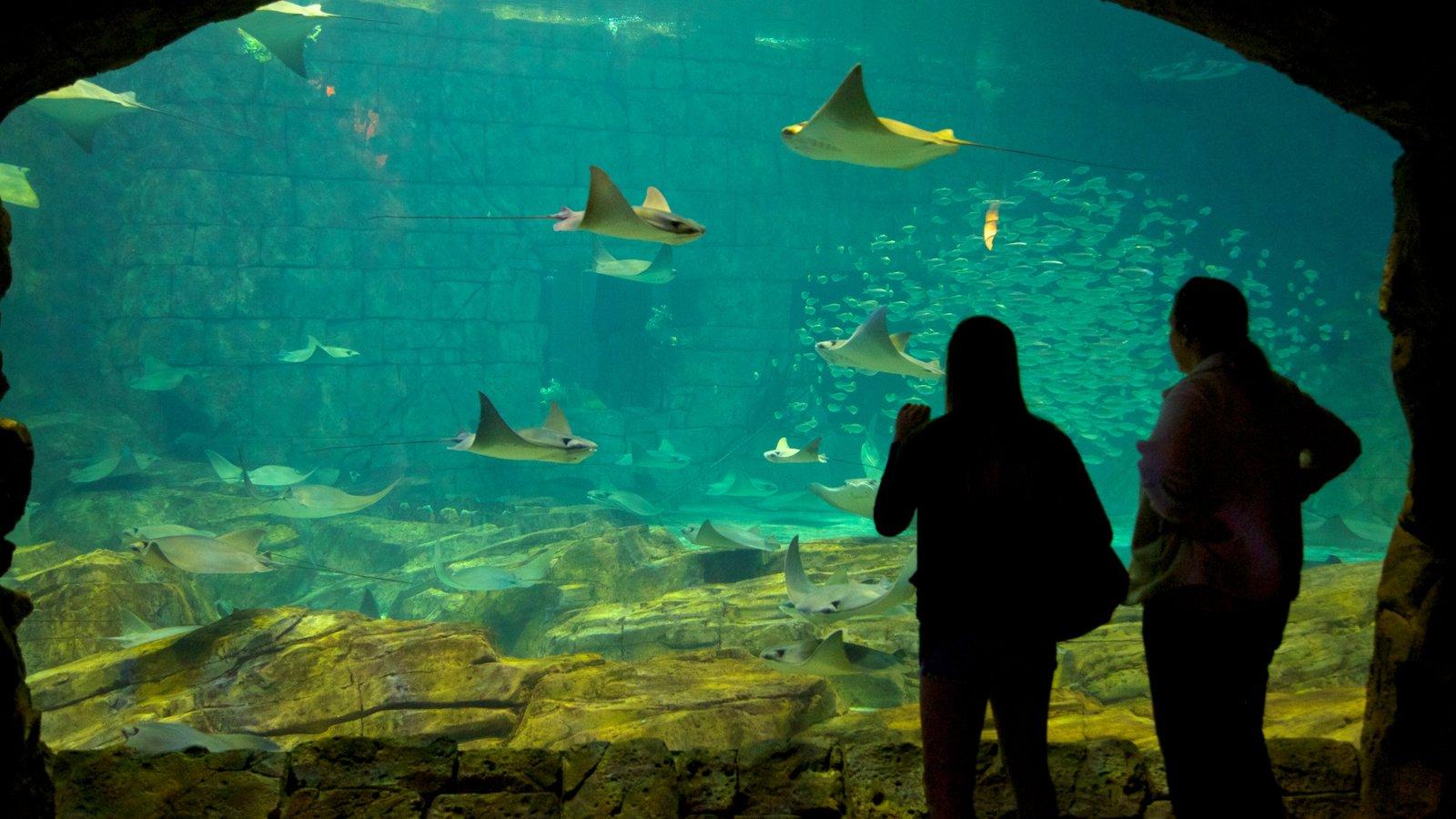 SeaWorld® Orlando caracterizando vistas internas e vida marinha assim como um casal