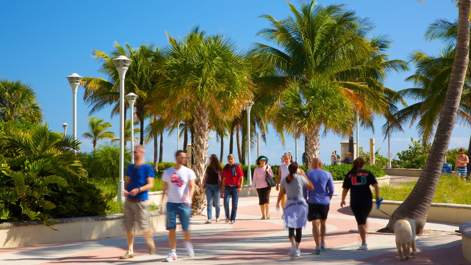 Miami Beach showing a park and tropical scenes