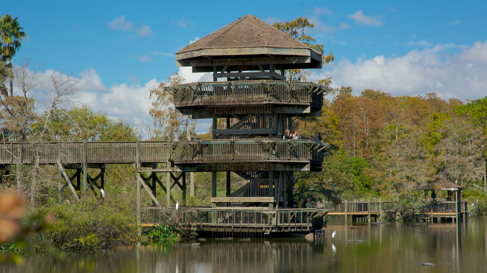 Gatorland showing a park, forests and a pond