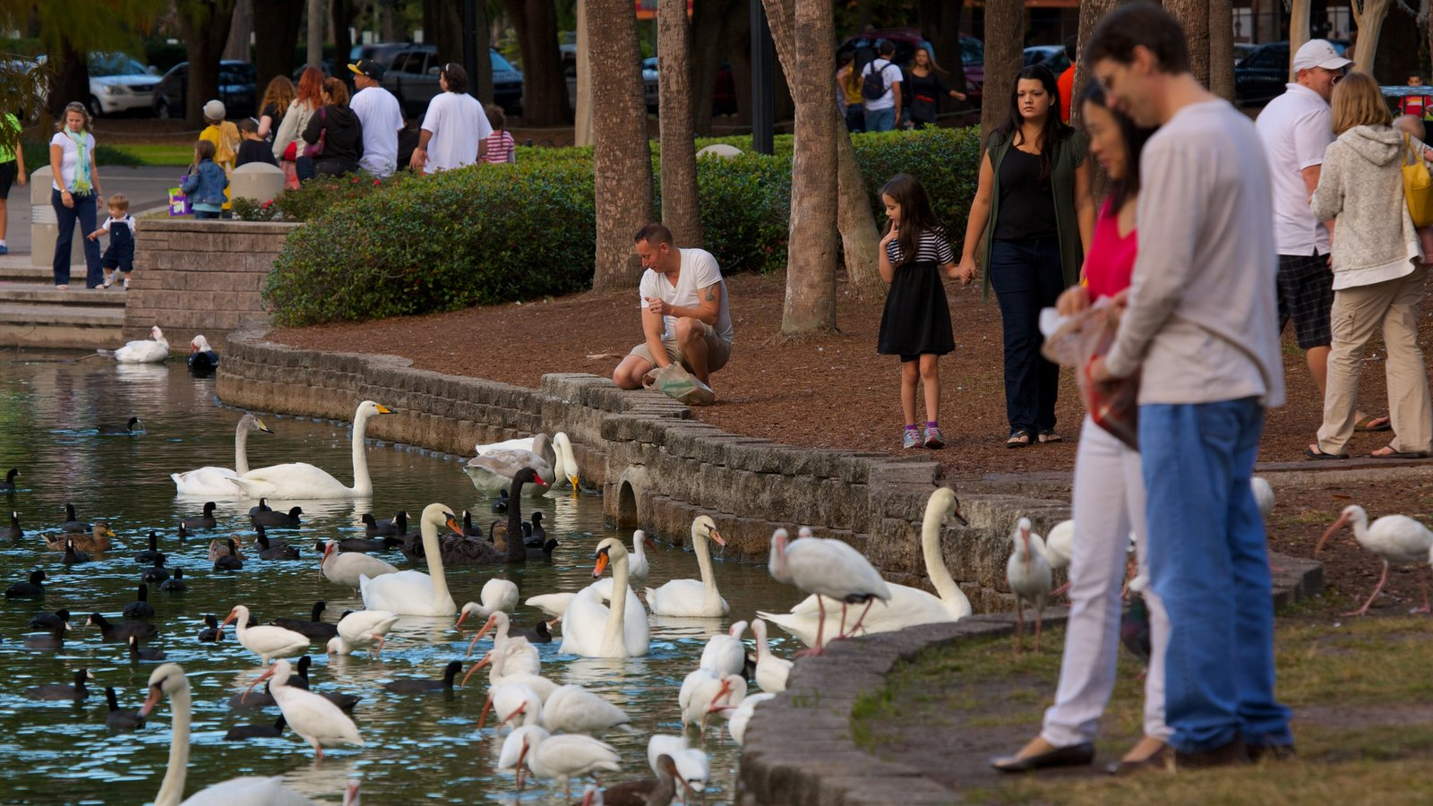 Lake Eola Park mostrando vida das aves e um parque