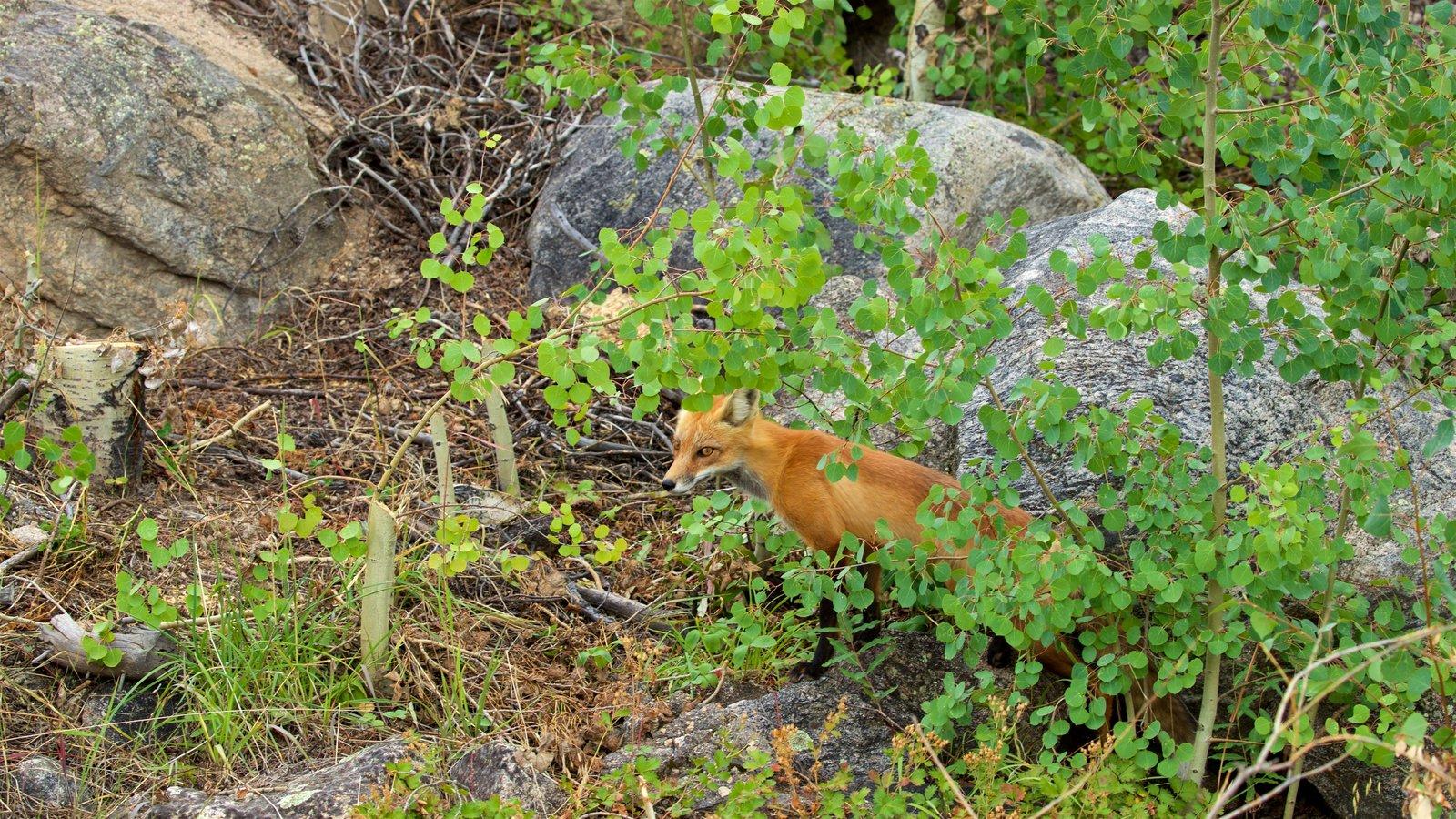 Rocky Mountain National Park caracterizando animais terrestres