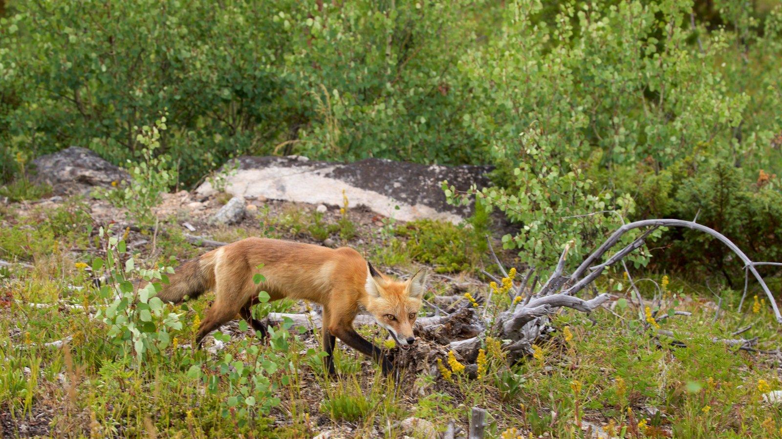Rocky Mountain National Park que inclui animais terrestres