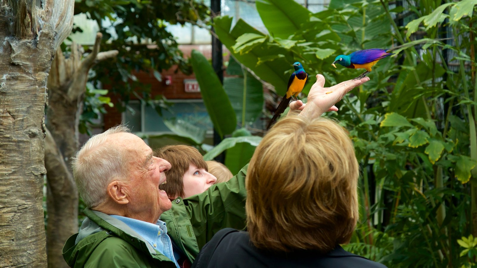 National Aviary mostrando vida das aves assim como um homem sozinho