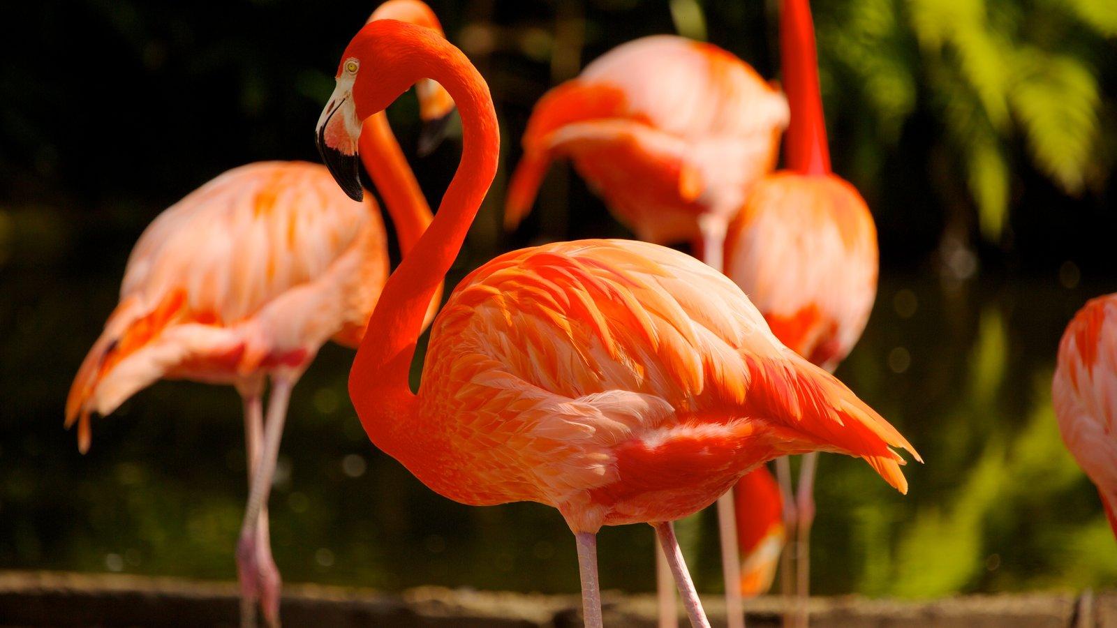 Flamingo Gardens showing zoo animals and bird life