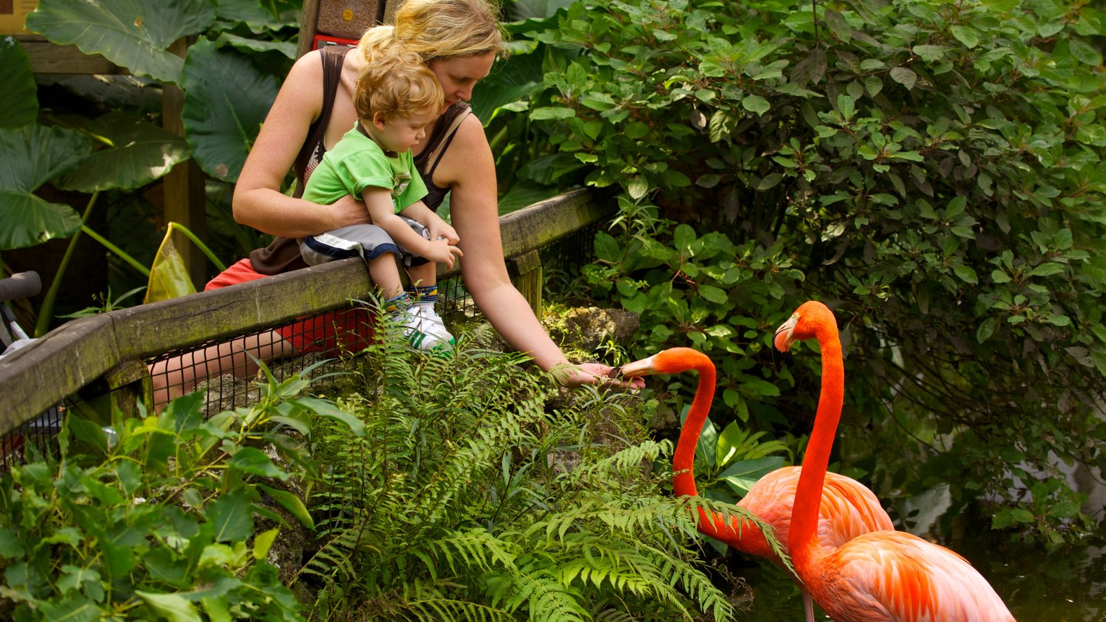 Flamingo Gardens featuring bird life and zoo animals as well as a family