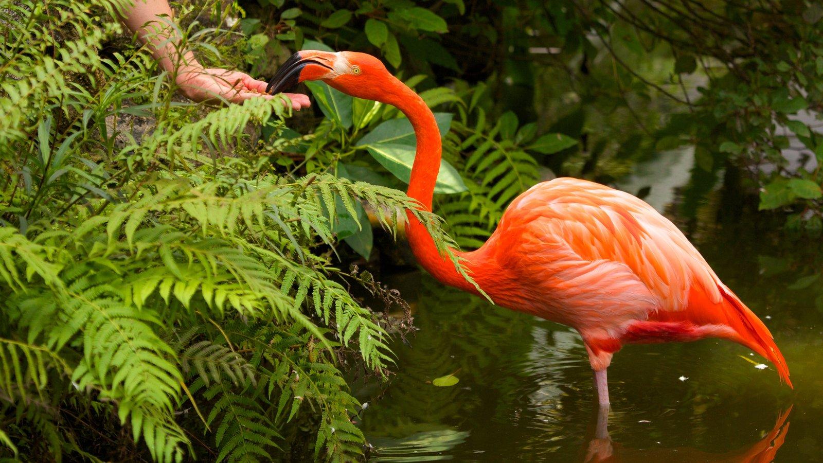 Flamingo Gardens which includes bird life