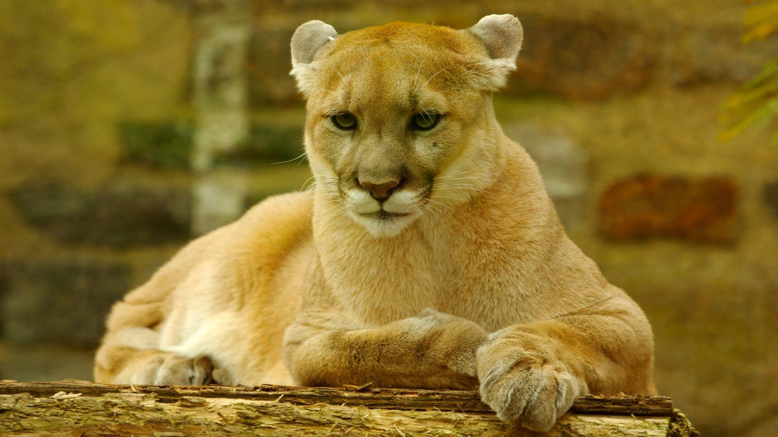 Philadelphia Zoo ofreciendo animales del zoológico y animales peligrosos
