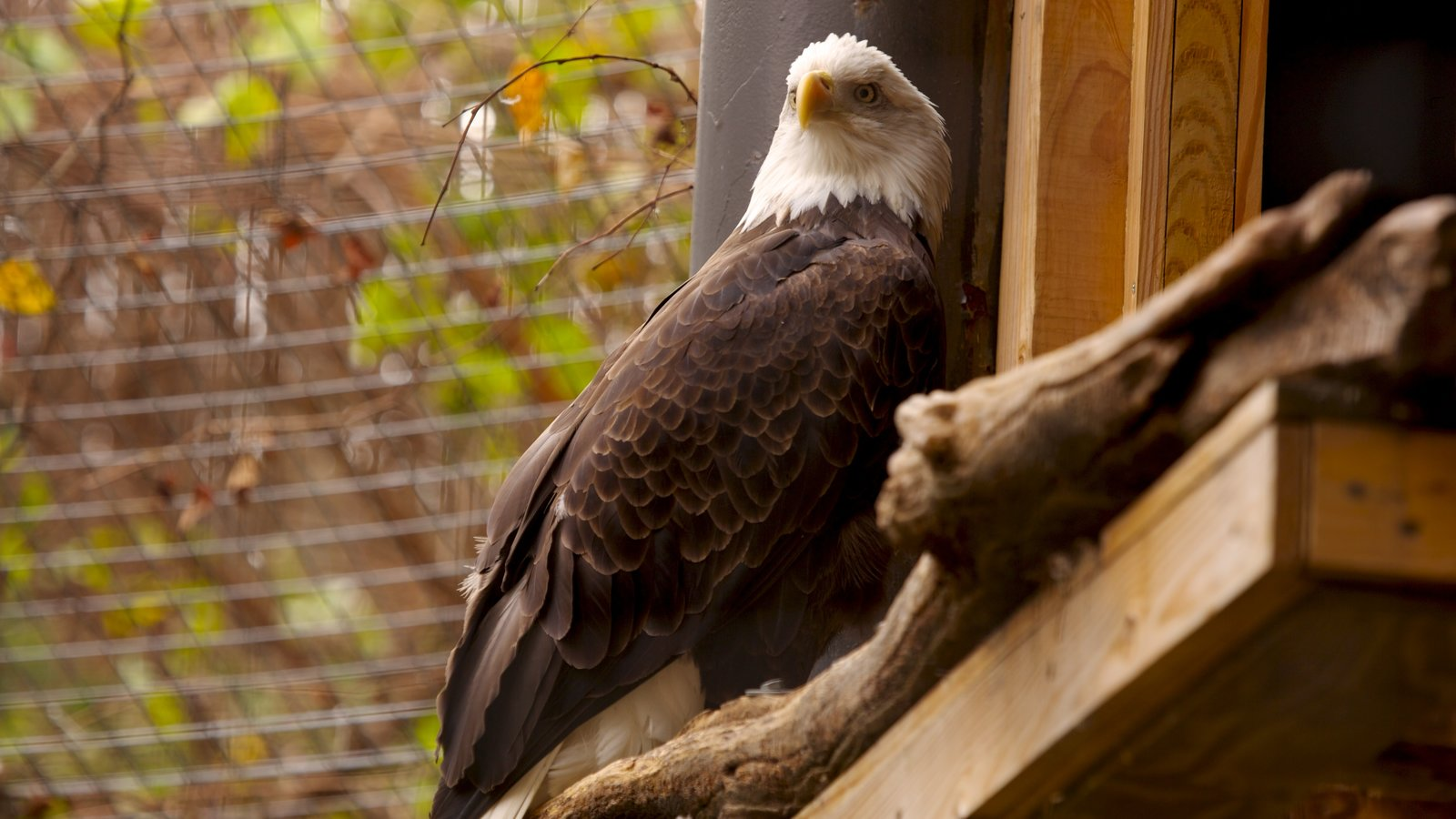 Philadelphia Zoo caracterizando vida das aves e animais de zoológico