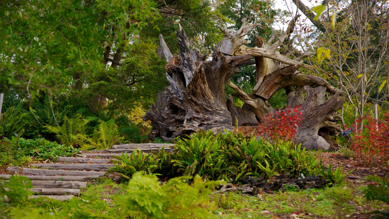 Morris Arboretum caracterizando um parque e paisagem