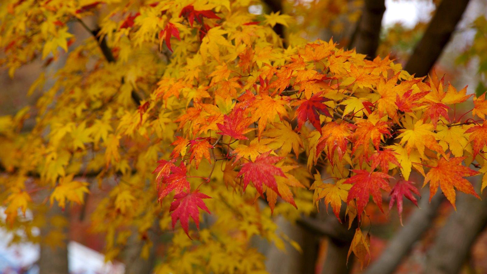 Morris Arboretum ofreciendo flores silvestres, hojas de otoño y un jardín