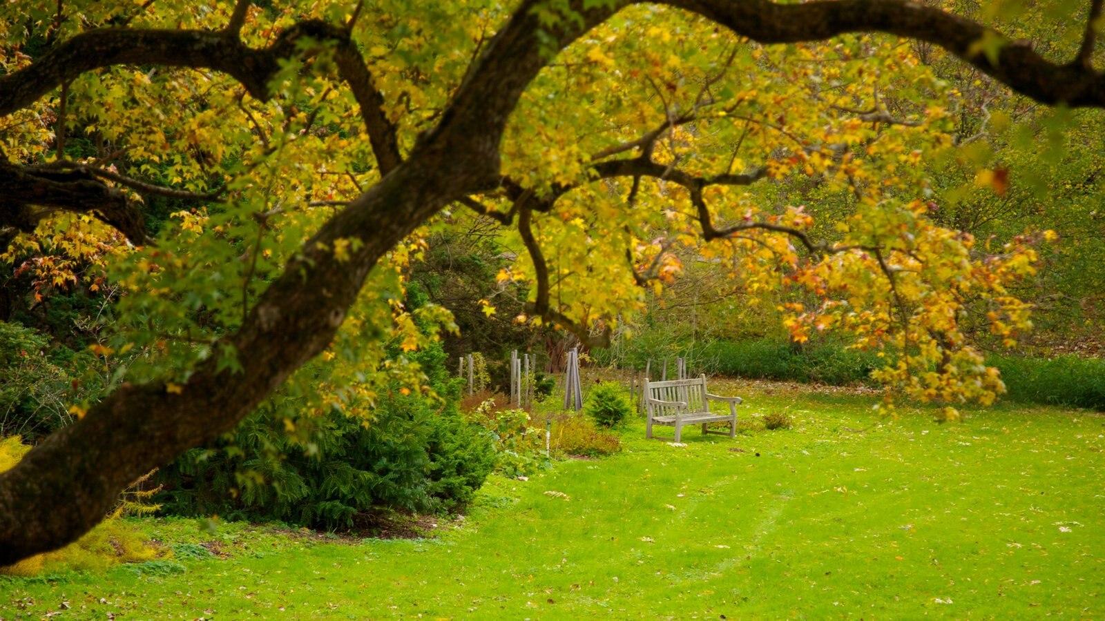 Morris Arboretum que inclui paisagem, um parque e cores do outono