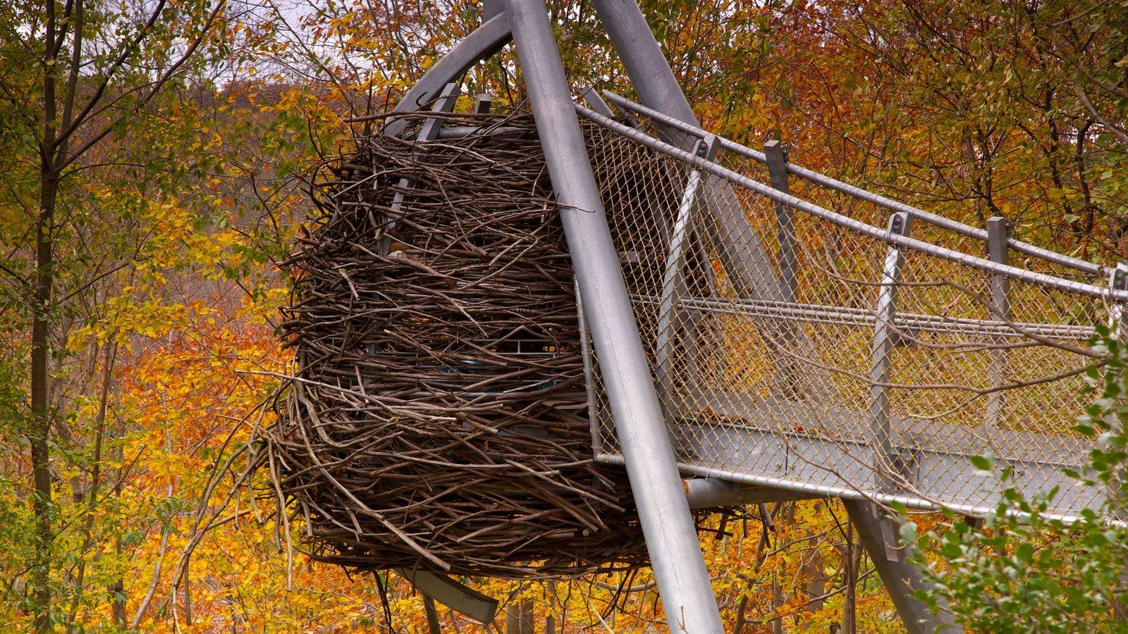 Morris Arboretum mostrando hojas de otoño y escenas forestales