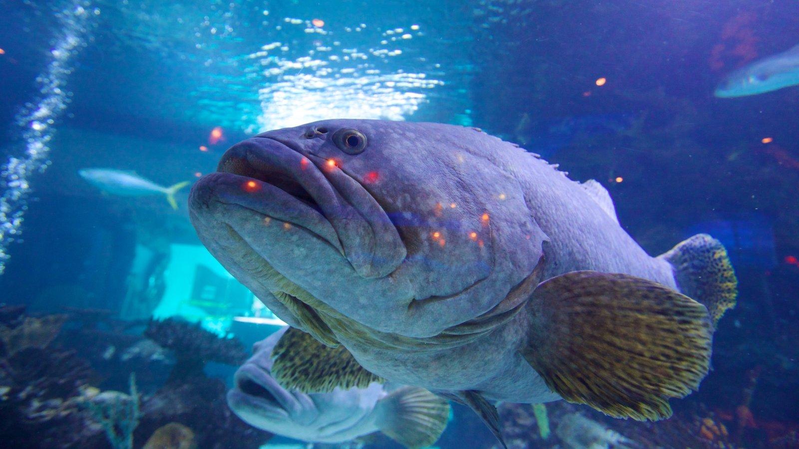 Downtown Aquarium Pictures View Photos Images Of
