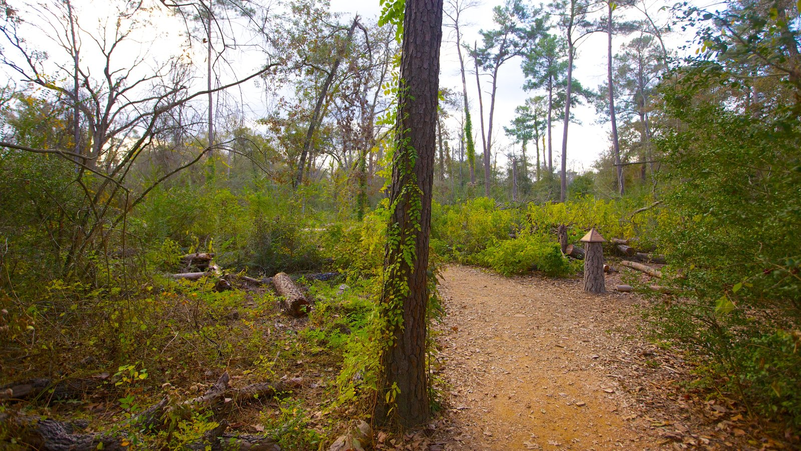 Peaceful Pictures: View Images of Houston Arboretum and Nature Center