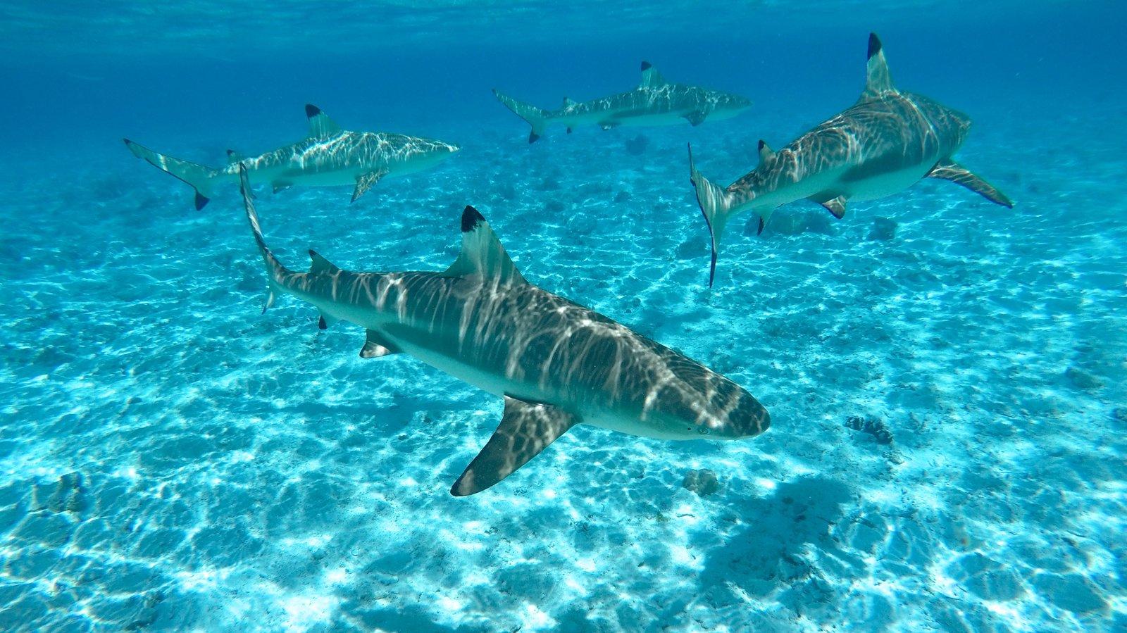 Bora Bora which includes marine life