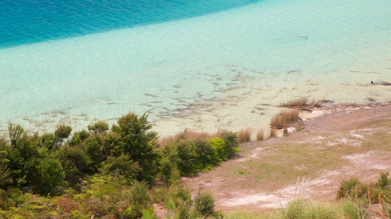 Kai Iwi Lakes featuring a lake or waterhole
