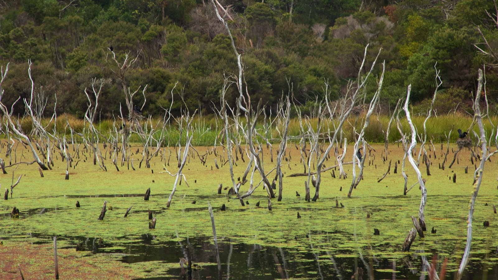 Kai Iwi Lakes which includes wetlands