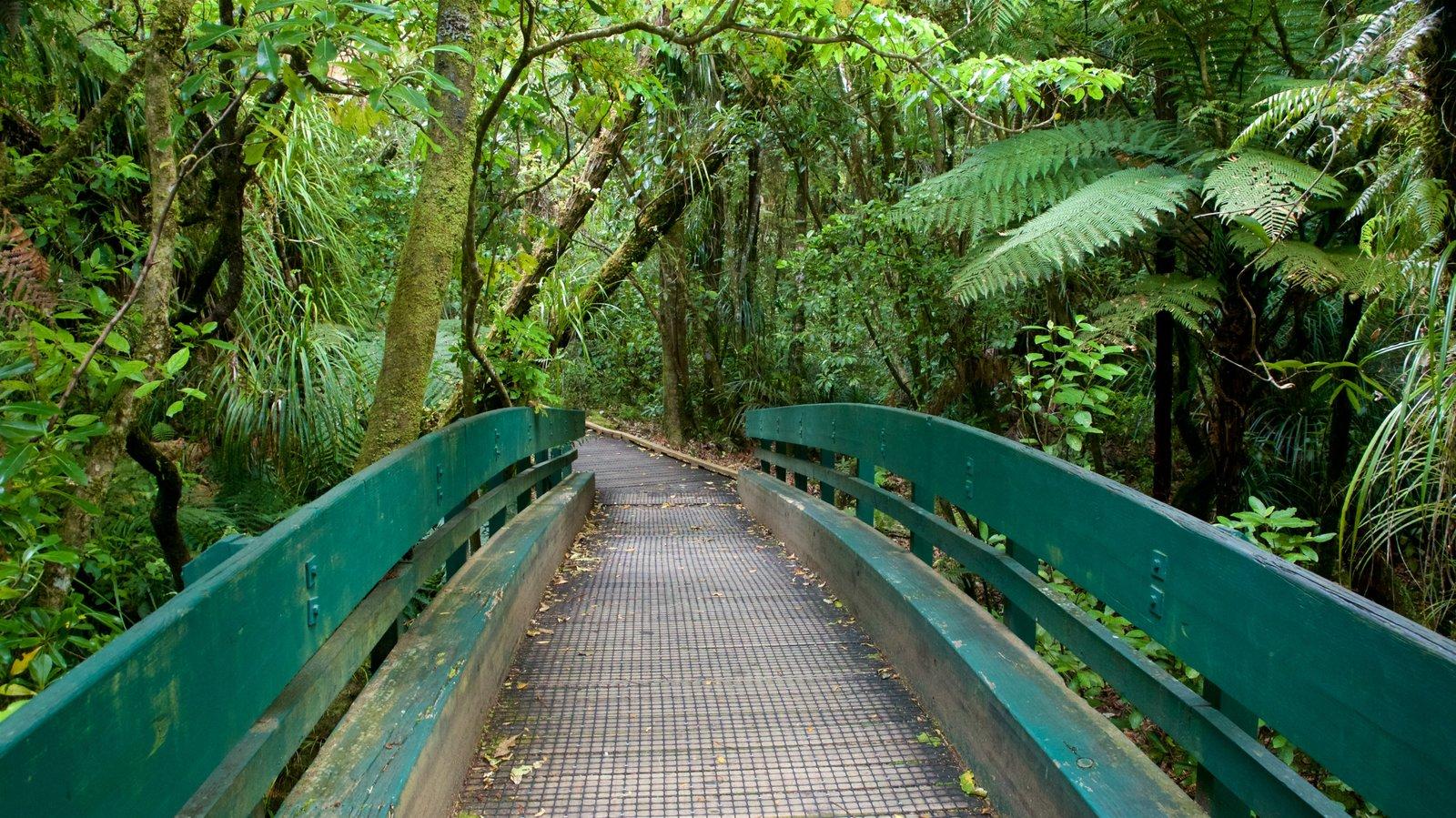 Tane Mahuta que incluye un puente y escenas forestales