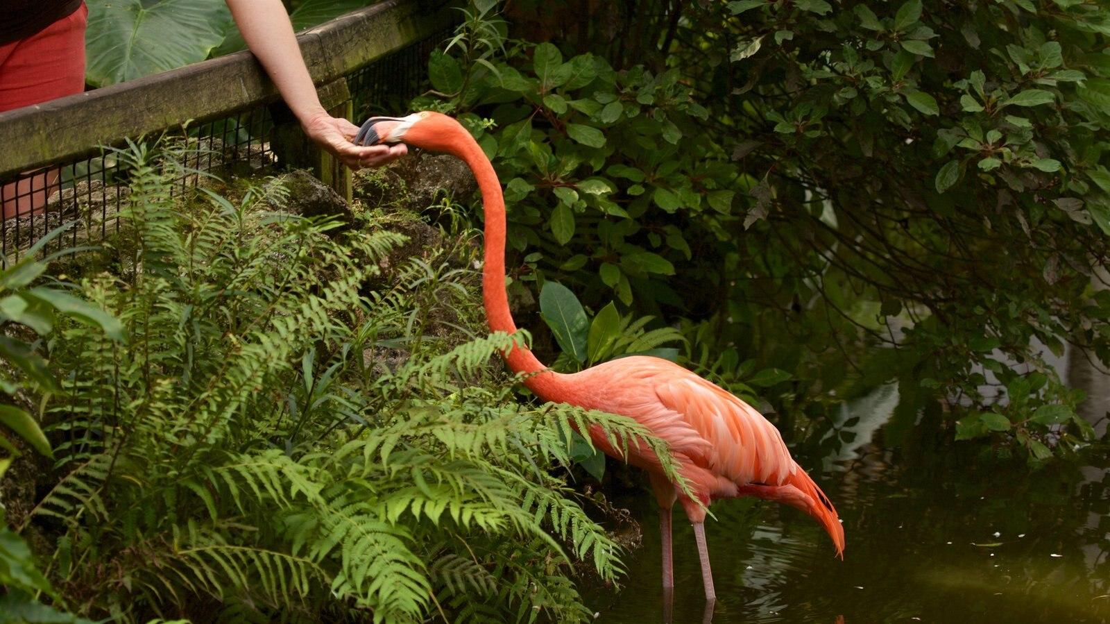 Flamingo Gardens featuring bird life and zoo animals