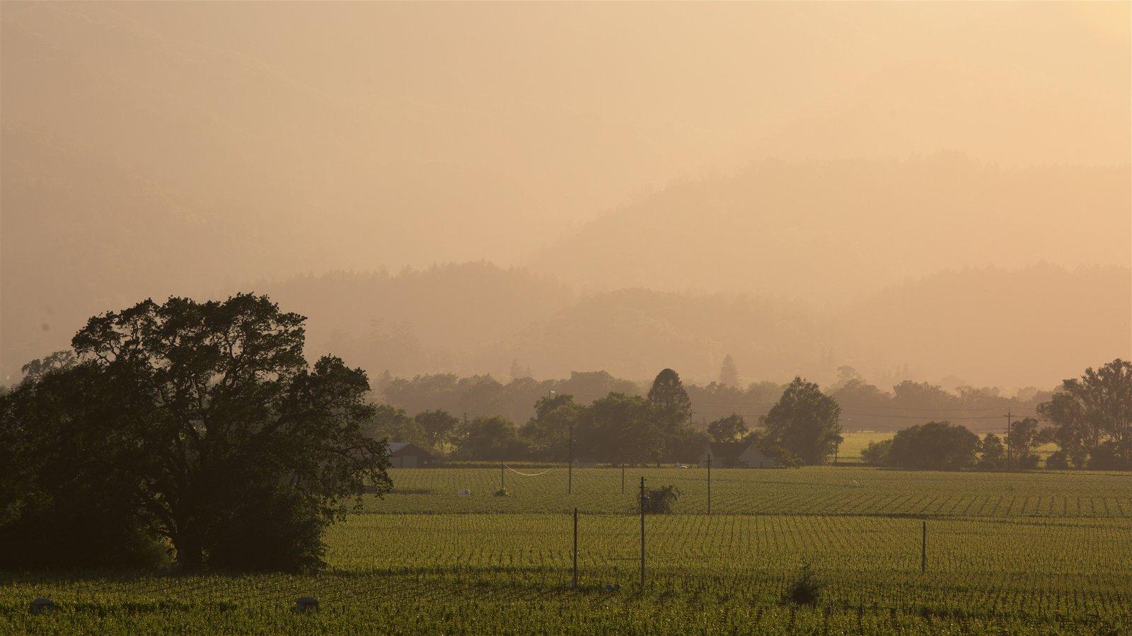 Napa Valley mostrando tierras de cultivo, escenas tranquilas y una puesta de sol
