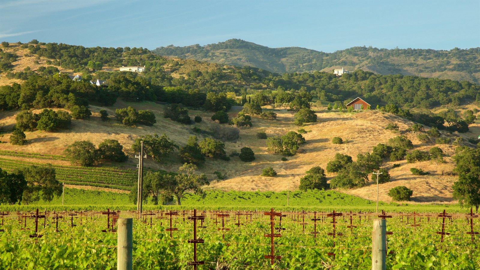 Napa Valley que incluye vistas de paisajes, escenas tranquilas y tierras de cultivo