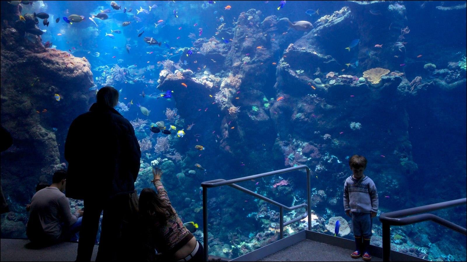 Academia de Ciências da Califórnia caracterizando vistas internas e vida marinha assim como uma família