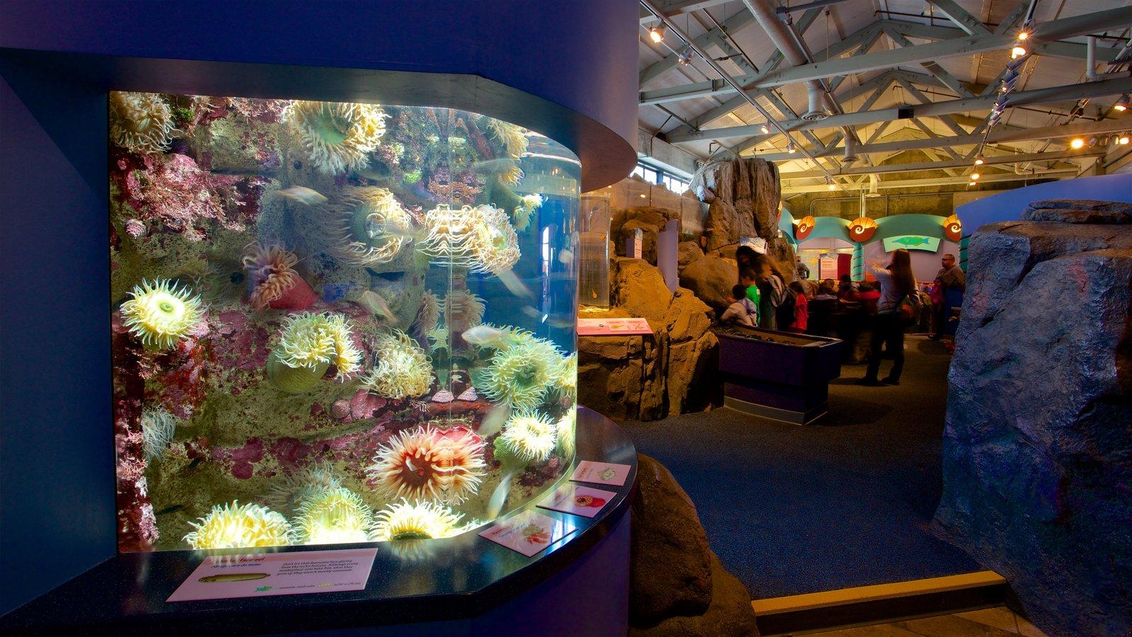 Monterey Bay Aquarium Pictures View Photos Images Of