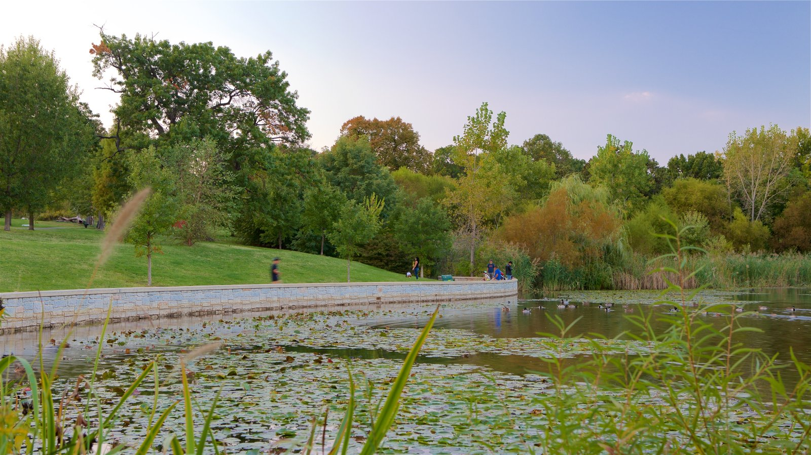 Patterson Park which includes a sunset, a pond and a garden