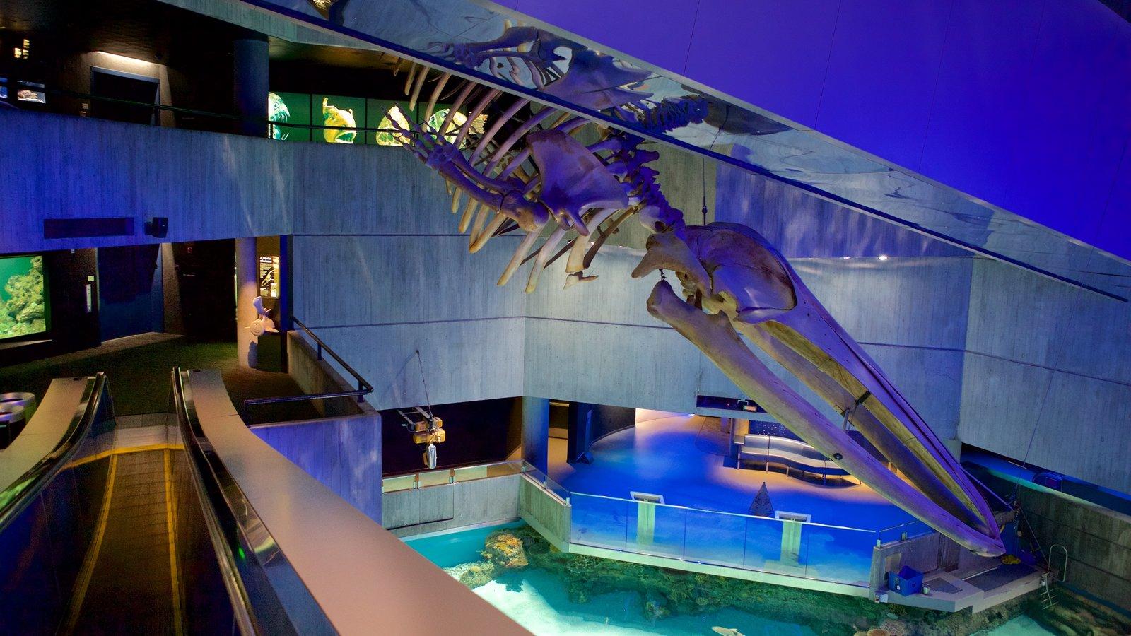 Image Result For Baltimore Aquarium