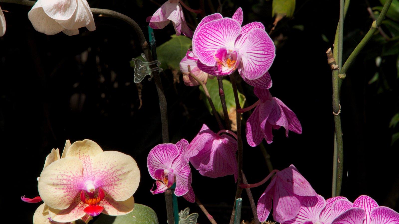 San Diego mostrando flores silvestres