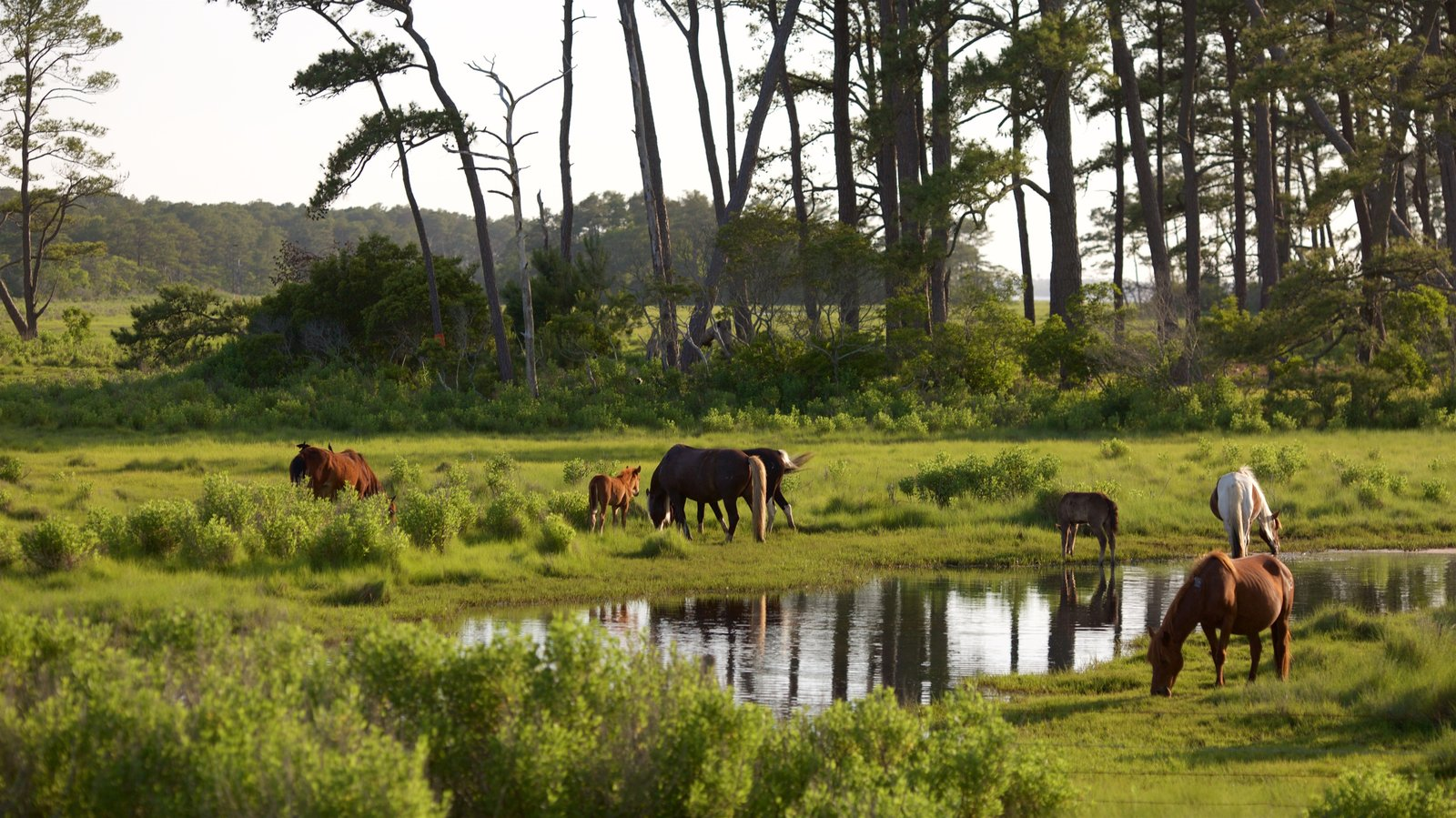 Assateague Island National Seashore which includes farmland, tranquil scenes and a pond
