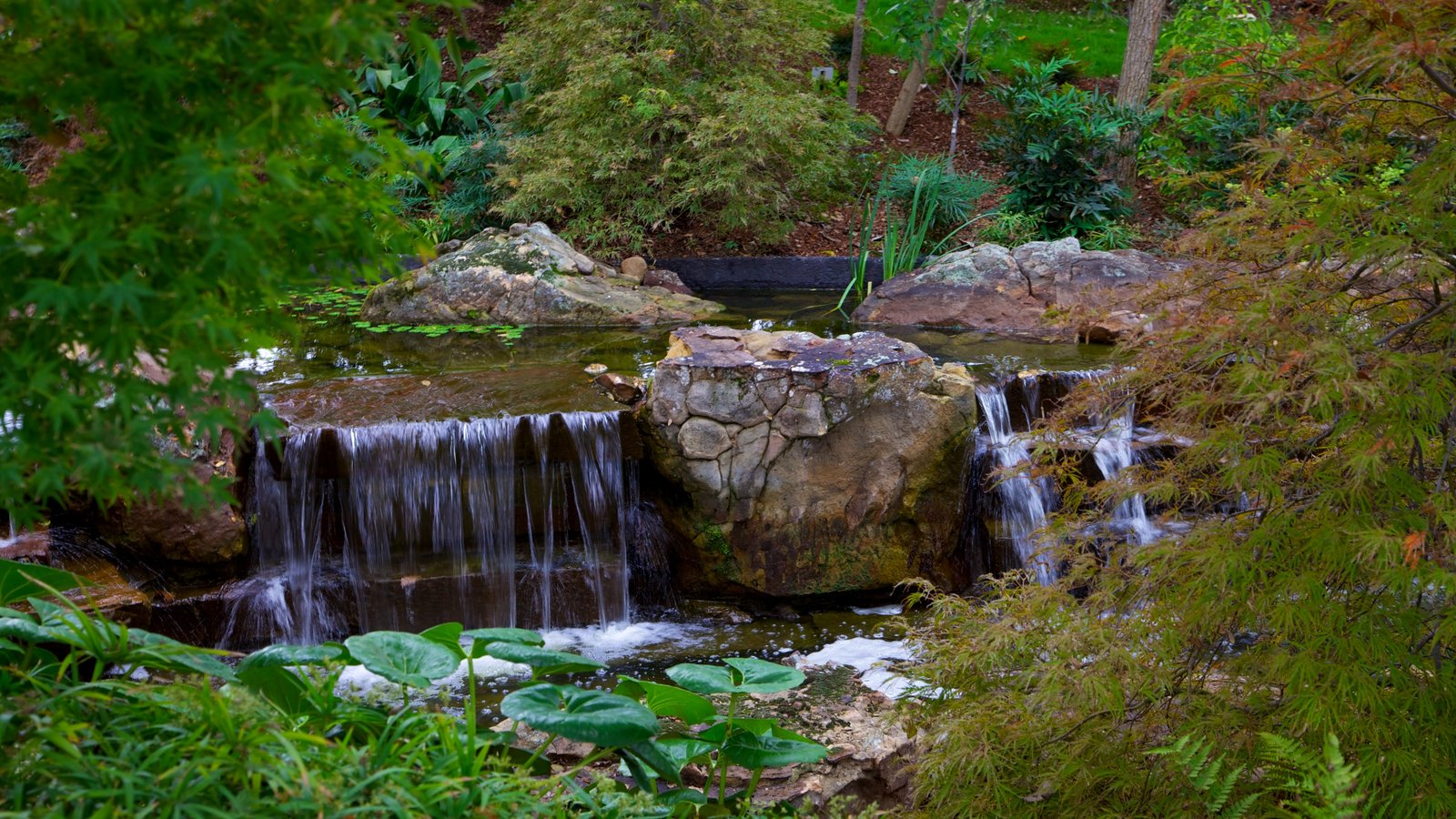 Gardens Parks Pictures View Images Of Dallas
