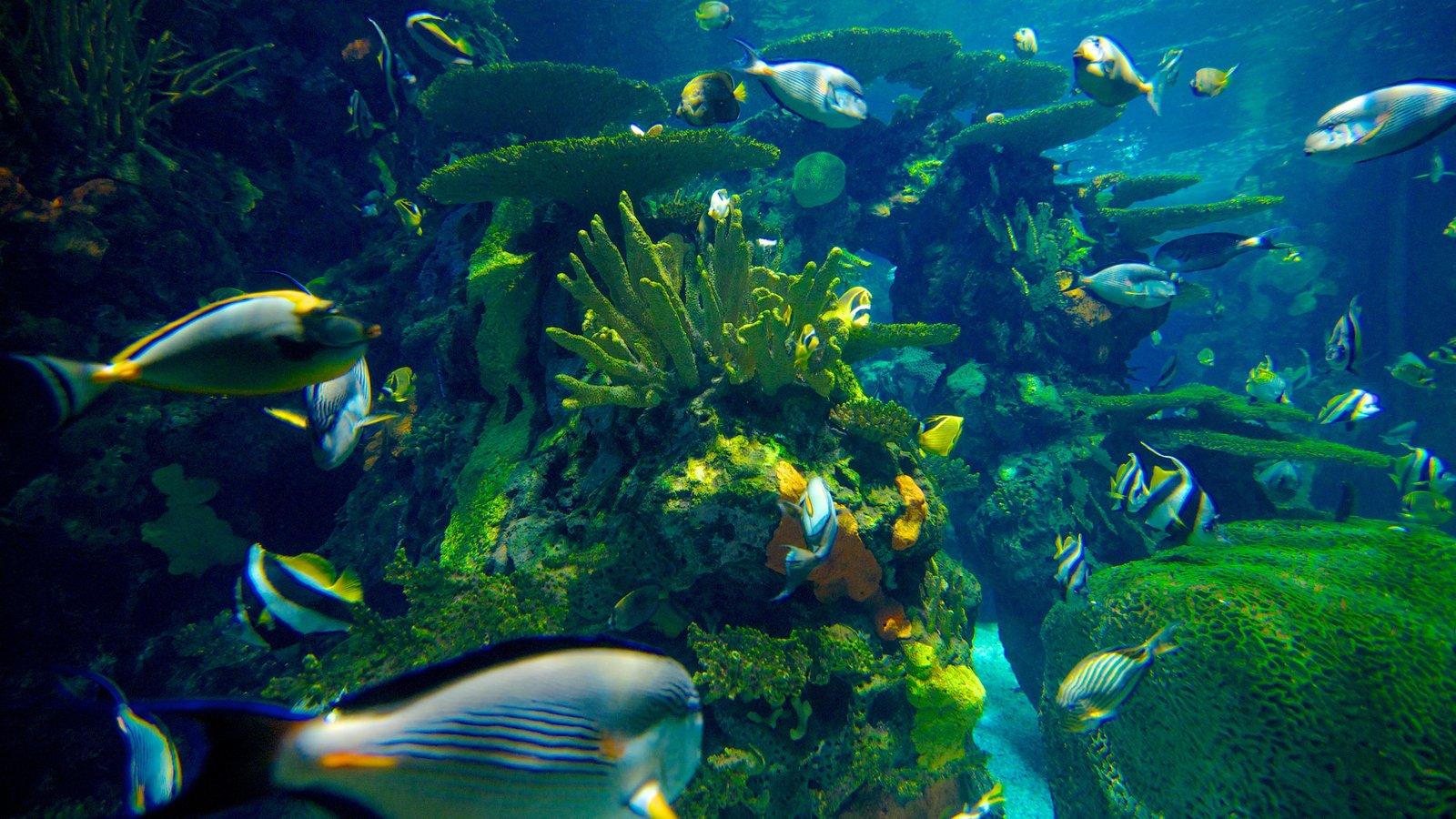 Ripley\'s Aquarium caracterizando vida marinha e coral