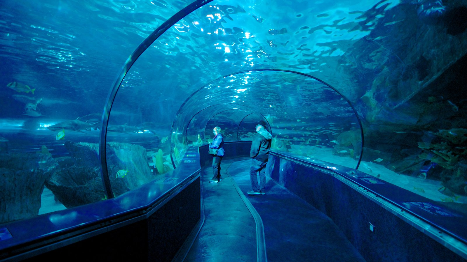Ripley\'s Aquarium caracterizando vistas internas e vida marinha