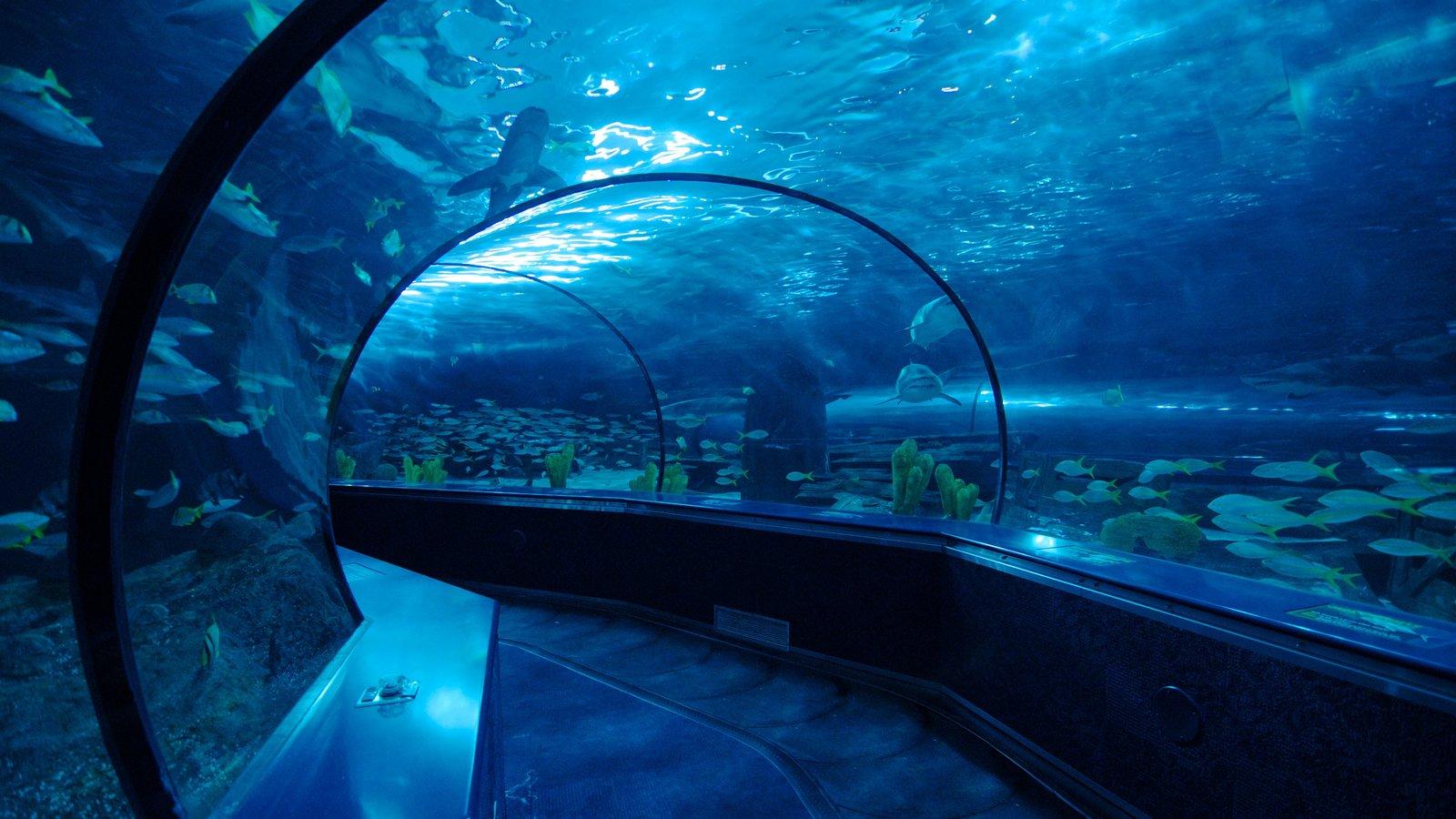 Ripley\'s Aquarium que inclui vida marinha e vistas internas